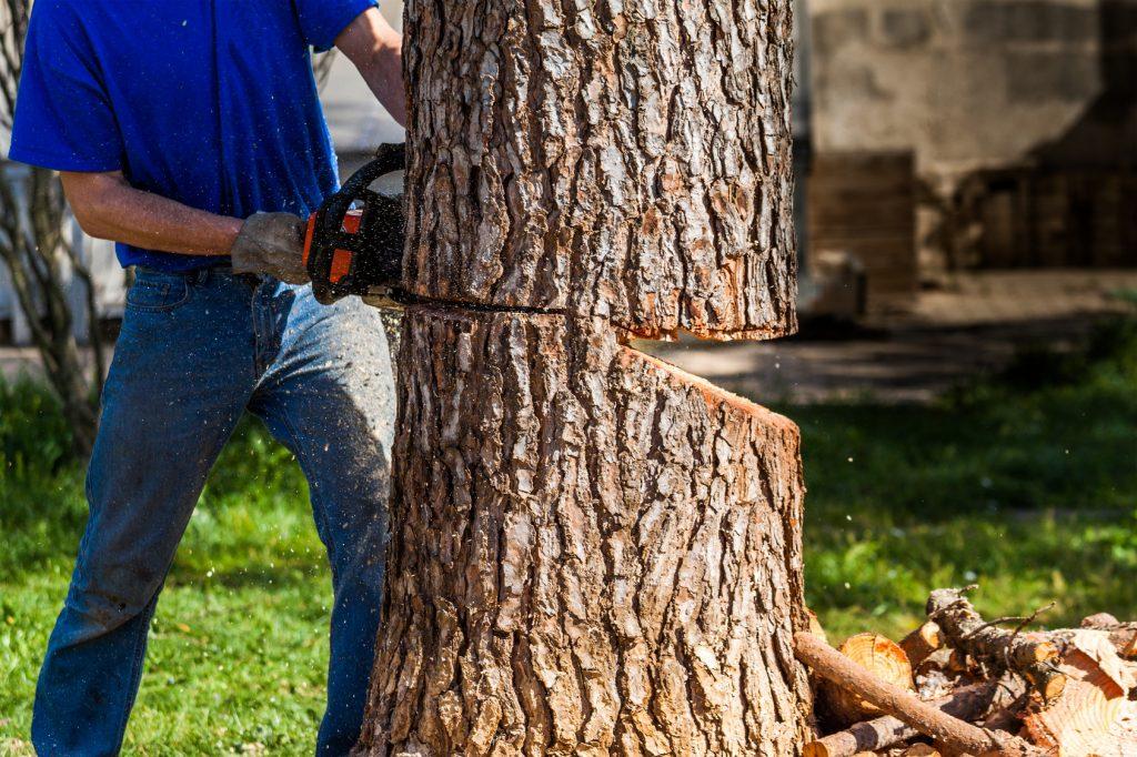 Abattage arbre dordogne