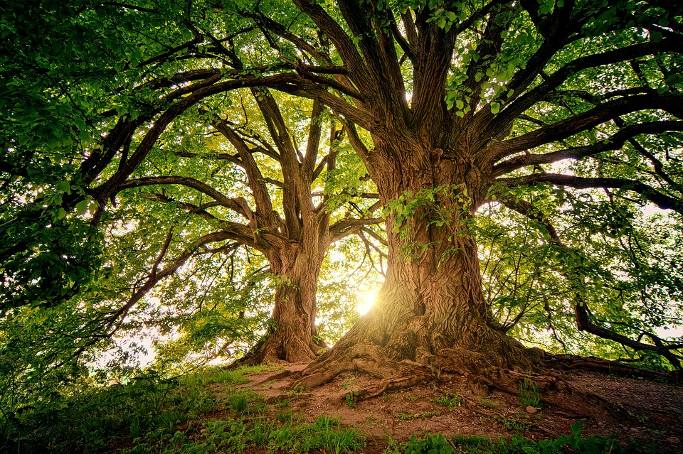 arbres dordogne