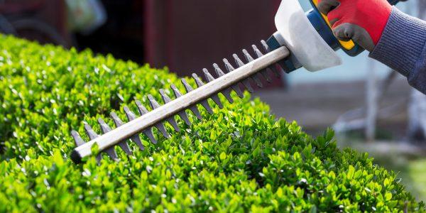 Guide pour tailler vos buissons avant l'été