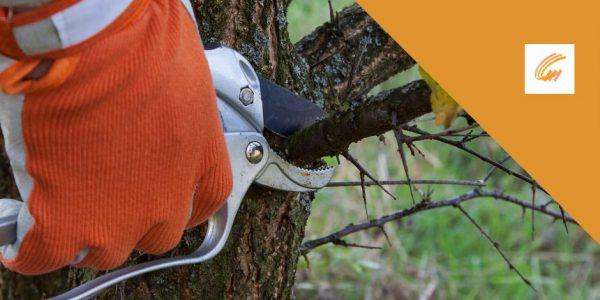 Pouvez-vous tailler des arbres pendant l'été?