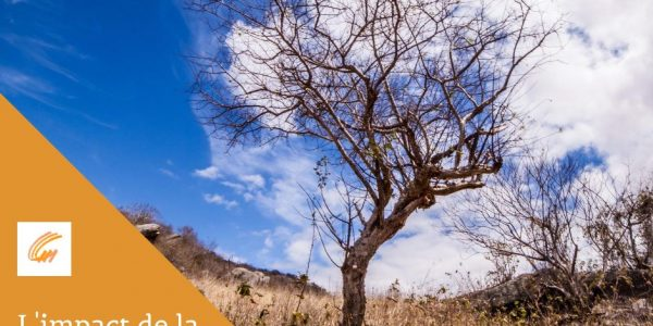 Comment identifier l'impact de la sécheresse sur les arbres