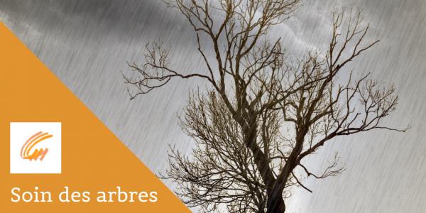 Soin des arbres avant une tempête