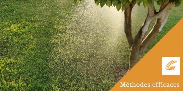 Méthodes efficaces pour arroser les arbres adultes et les jeunes arbres