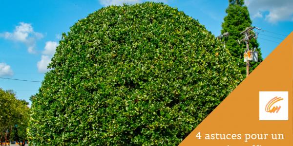 4 astuces pour un entretien efficace des arbres en été