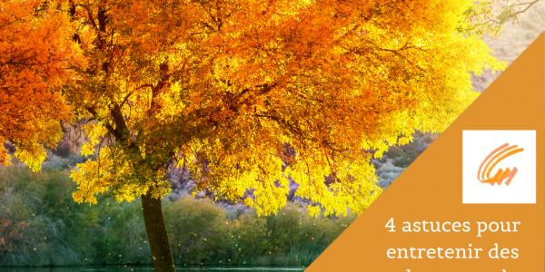 4 astuces pour entretenir les arbres au début de l'automne