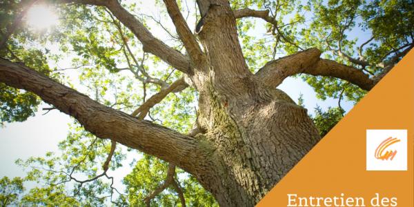 Entretien des arbres adultes