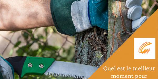 Quel est le meilleur moment pour élaguer les arbres ?